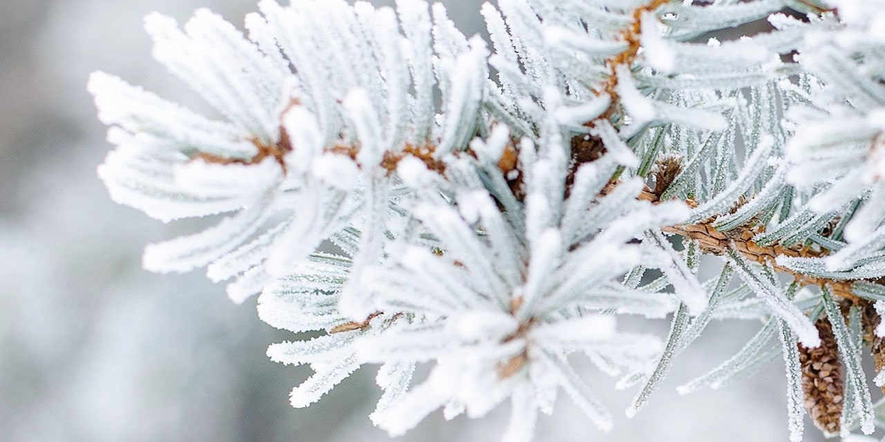 Frosted tree branch in winter